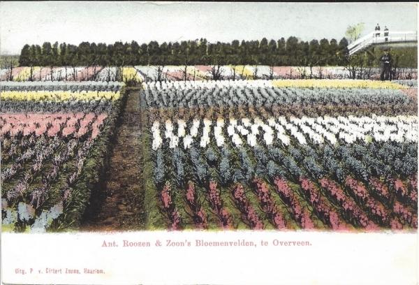 Houtvaart, 1903
